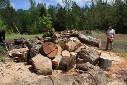 Wood, wood, so much wood.
